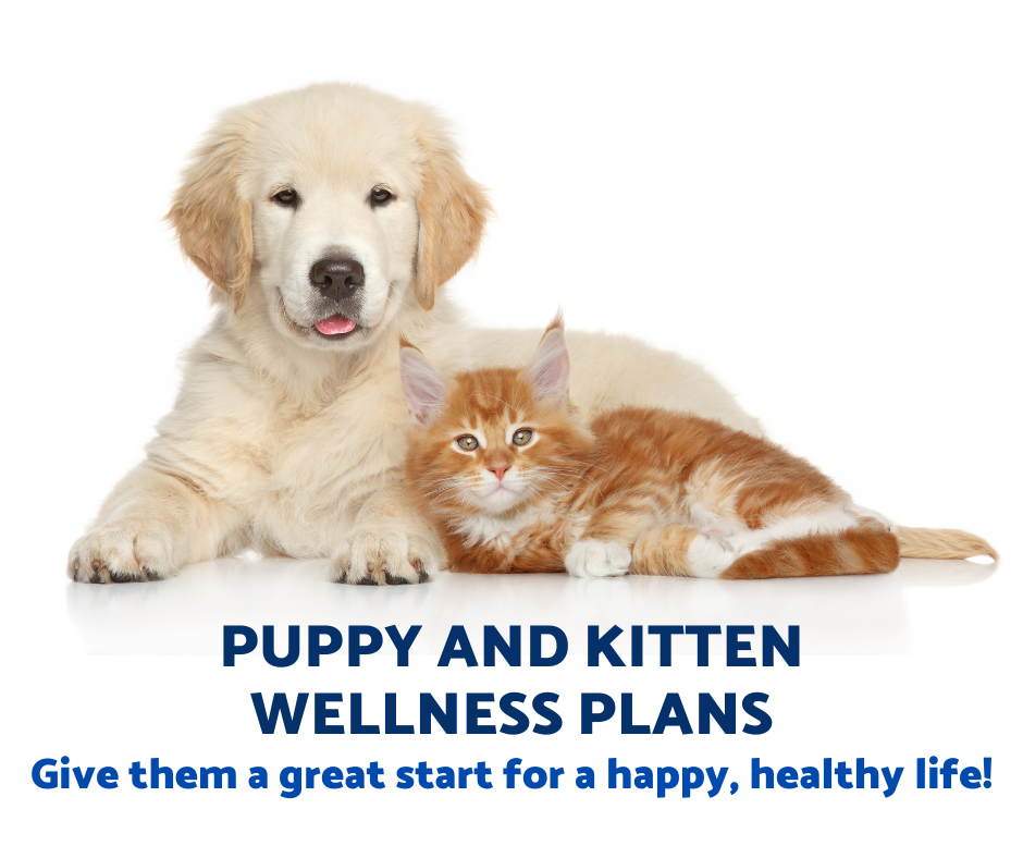 puppy kitten wellness